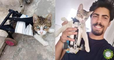 , Joven ayuda animales callejeros creando prótesis a partir de materiales reciclados