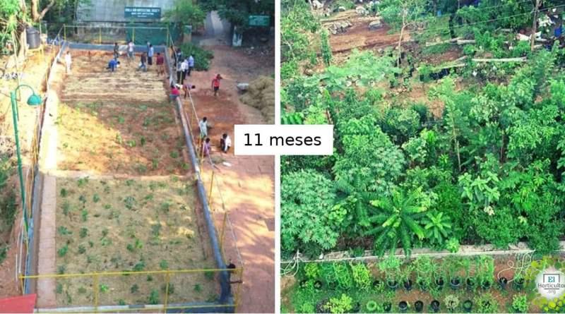 , Método Miyawaki: Cultivá un bosque nativo 10 veces más rápido