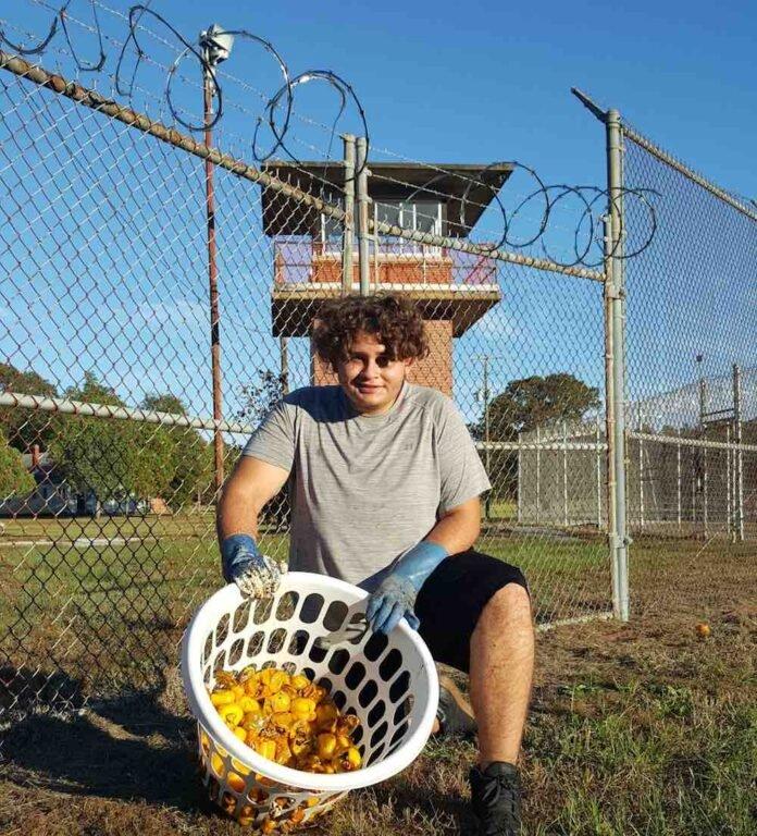 ONG convierte cárceles abandonadas en granjas sostenibles