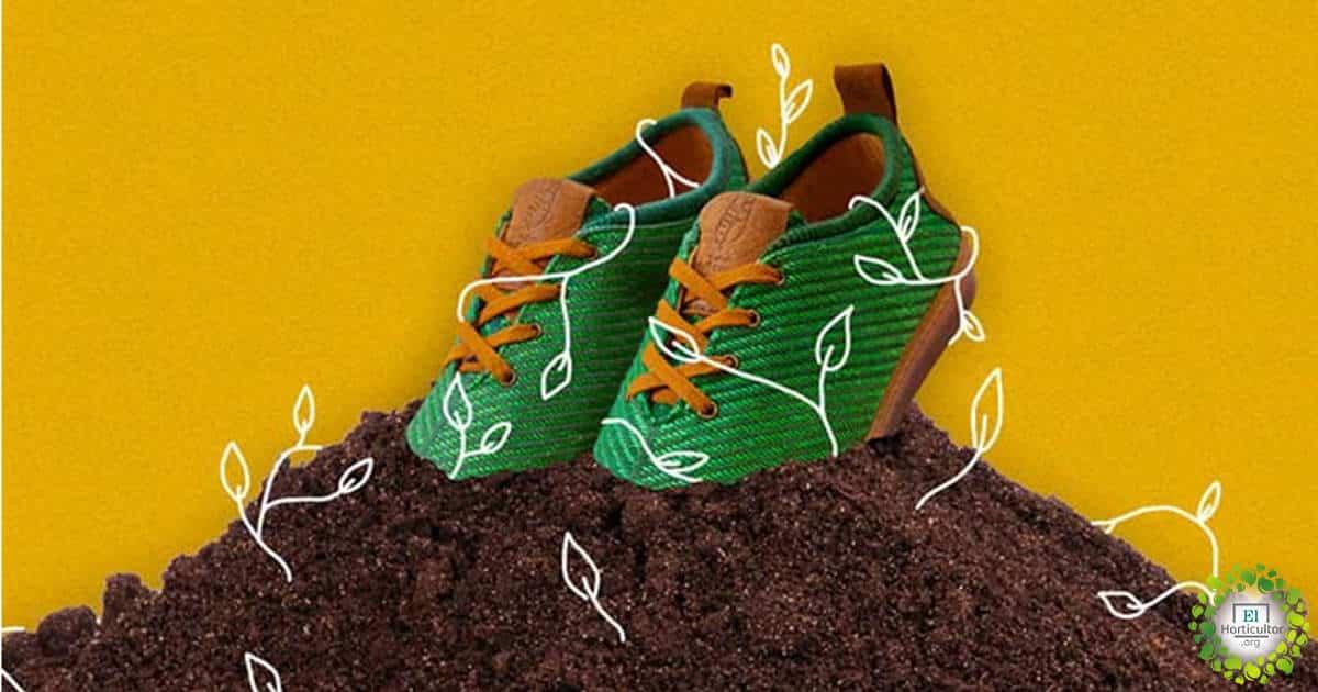 Españoles crean calzado Biodegradable hechos con fibra de plátano
