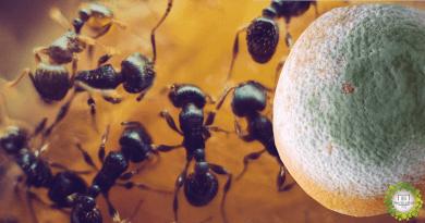 , Método efectivo y ecológico para que las hormigas abandonen nuestro Huerto