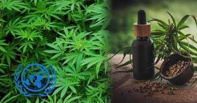 , La ONU retira al cannabis de la lista de drogas peligrosas y lo reconoce como sustancia terapéutica después de 50 años