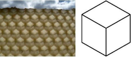 Abejas aplican la geometría sagrada para construir estas inusuales colmenas