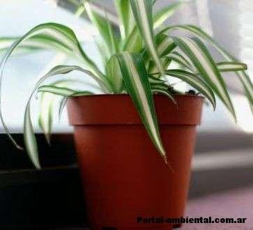 plantas de interior que limpian el aire