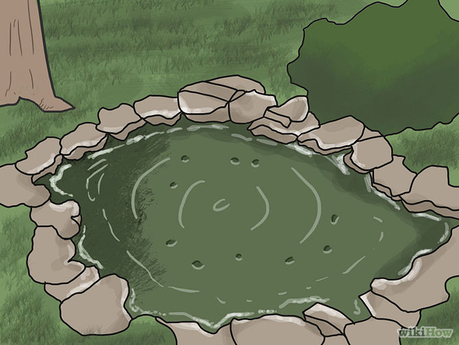 Grow an Edible Pond Step 1Bullet2.jpg