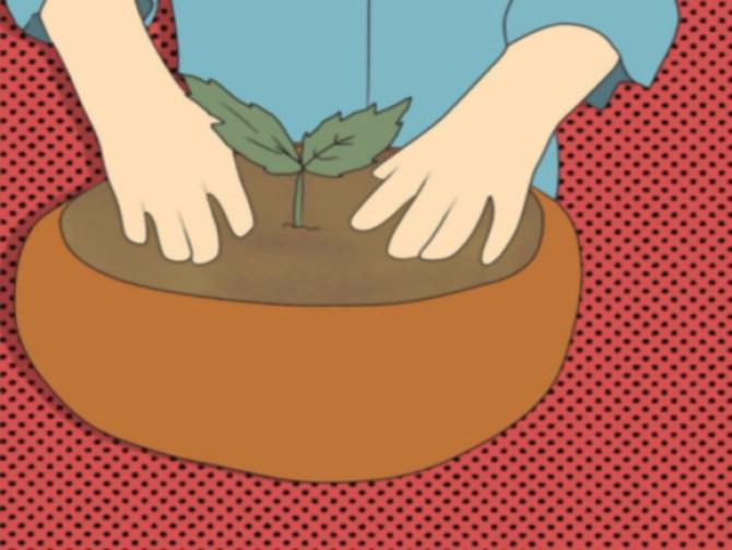 Grow an Edible Pond Step 3.jpg