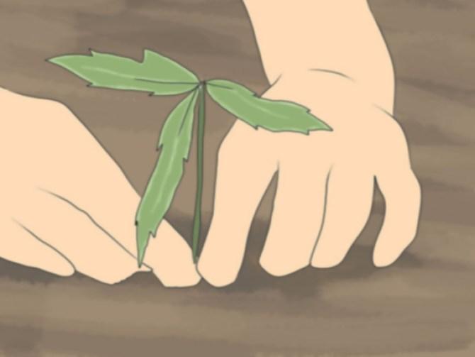 Grow an Edible Pond Step 3Bullet2.jpg
