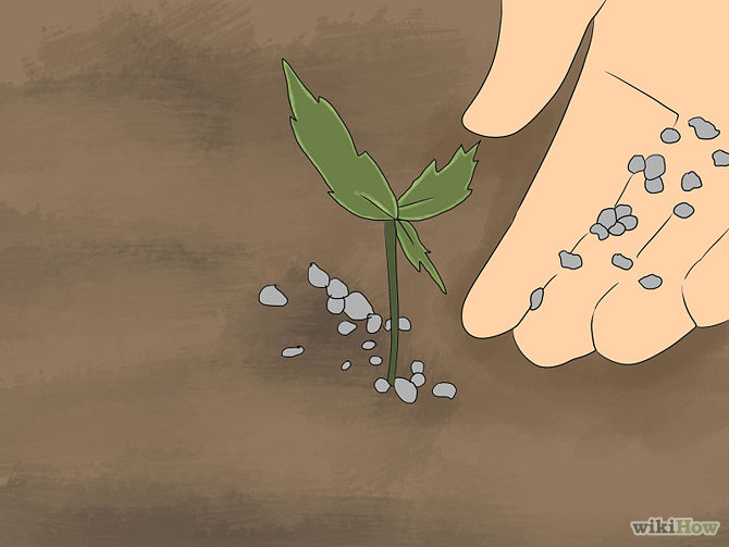 Grow an Edible Pond Step 3Bullet4.jpg