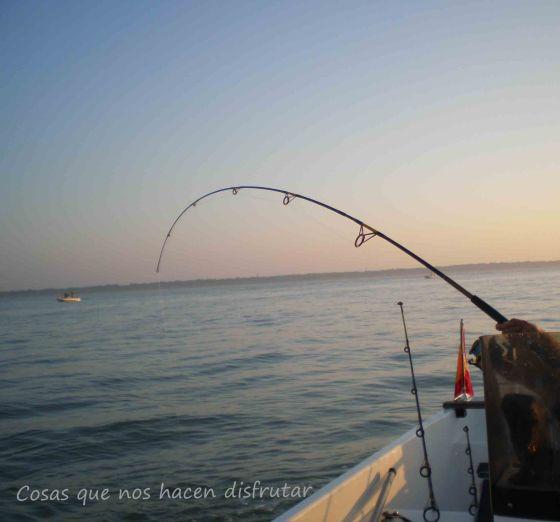 Pesca de dorada en el Guadalquivir