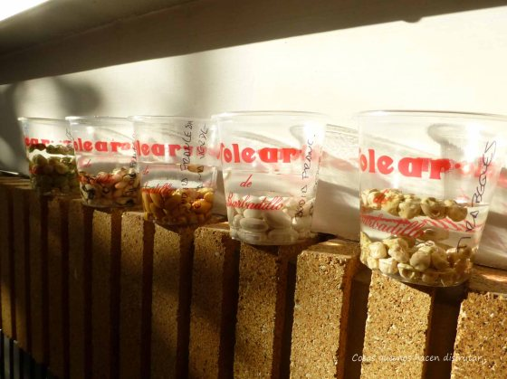 Cultivo #tirabeque #judiasverdes #guisantes #perlas de salud
