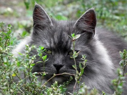 cancro gatto omeopatia
