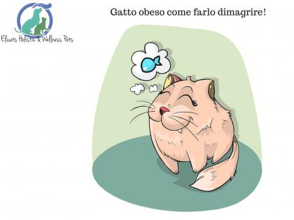 Gatto obeso