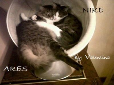 Cibo per il nostro gatto no carboidrati sì amminoacidi