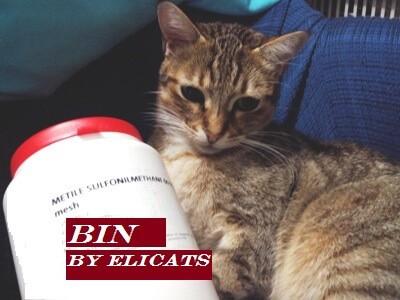Glucosamina condroitina MSM nel gatto e cane