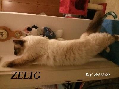 Olio di krill per il gatto e il cane