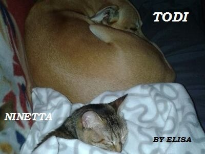 Tenia nel gatto e nel cane