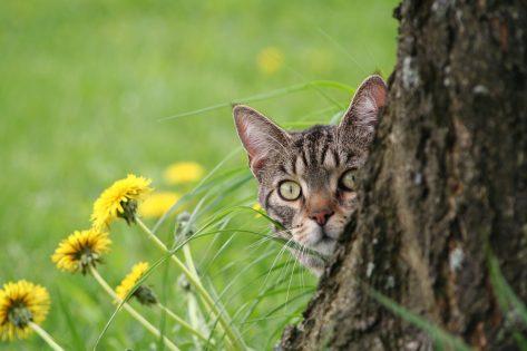 Felv Fiv gatto terapie naturali