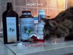 Olio di cumino nero nel gatto e cane