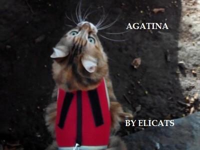 Tarassaco Bardana nel cane gatto