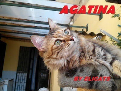 Ascite cane gatto Cause Sintomi