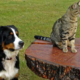 wellness pets