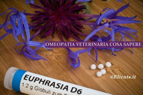 Omeopatia Veterinaria Cosa sapere