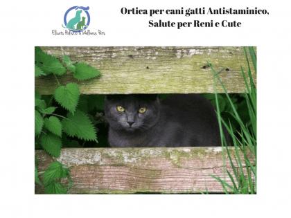Ortica per cani gatti