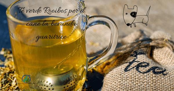 Tè verde Rooibos per il cane la bevanda guaritrice