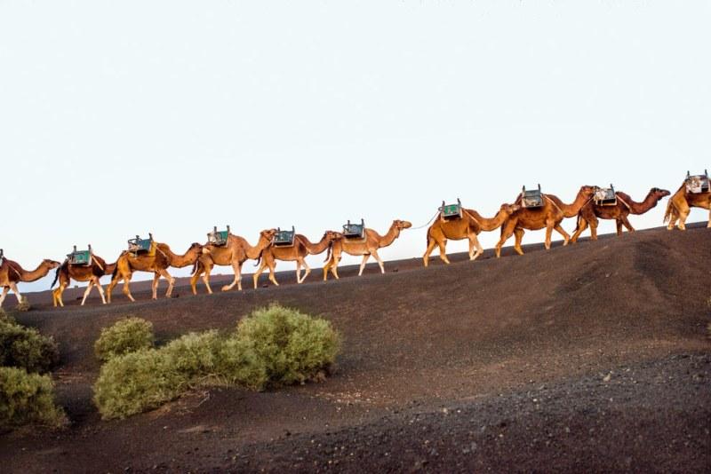 Ilhas Canárias: Formas de vida animal diferenciadas vão te fazer perguntar se está mesmo em território espanhol