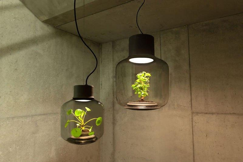 Planta autossustentável cresce iluminada por LED
