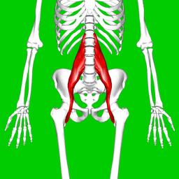 By Anatomography (en:Anatomography (setting page of this image)) [CC BY-SA 2.1 jp], via Wikimedia Commons