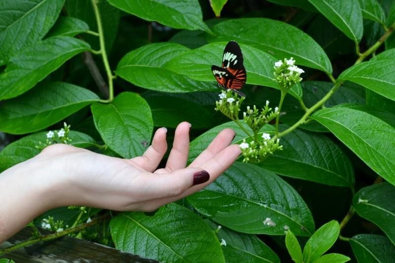 Significado de los Dedos de la Mano - Elizabeth Healing Arts
