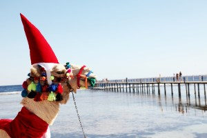 Mon Expérience Noël en Egypte