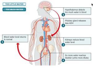 bio_2_too_much_water-13ED0EF06FB01301960
