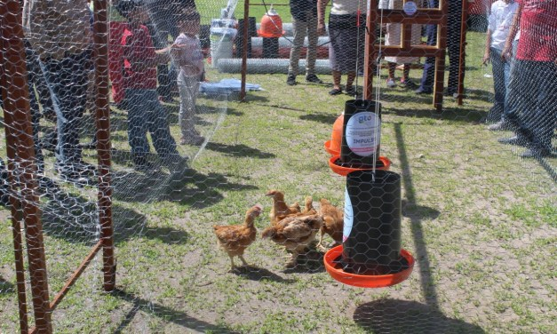 Apoyan a avicultores de Manuel Doblado