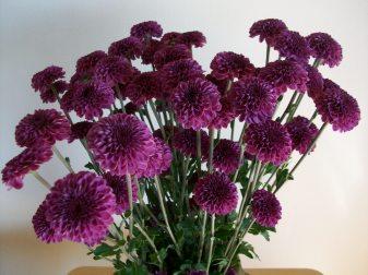 PurpleFlowers 007