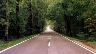 c08o1025-tramo-del-camino-en-roncesvalles