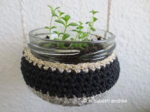 hanging basket with plant cuttings