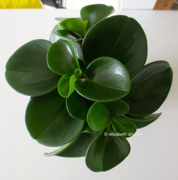 plant on table