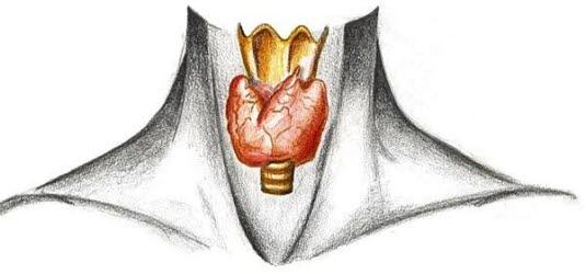 Sköldkörteln Bild: Medibas