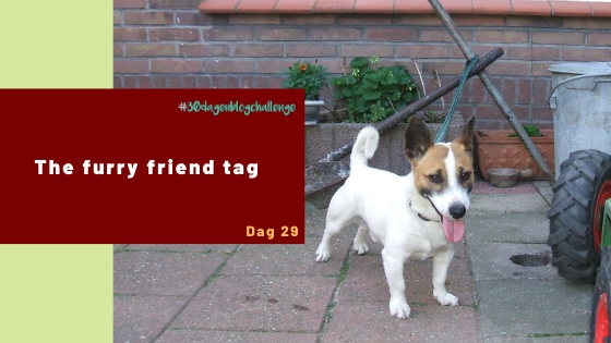 The furry friend tag