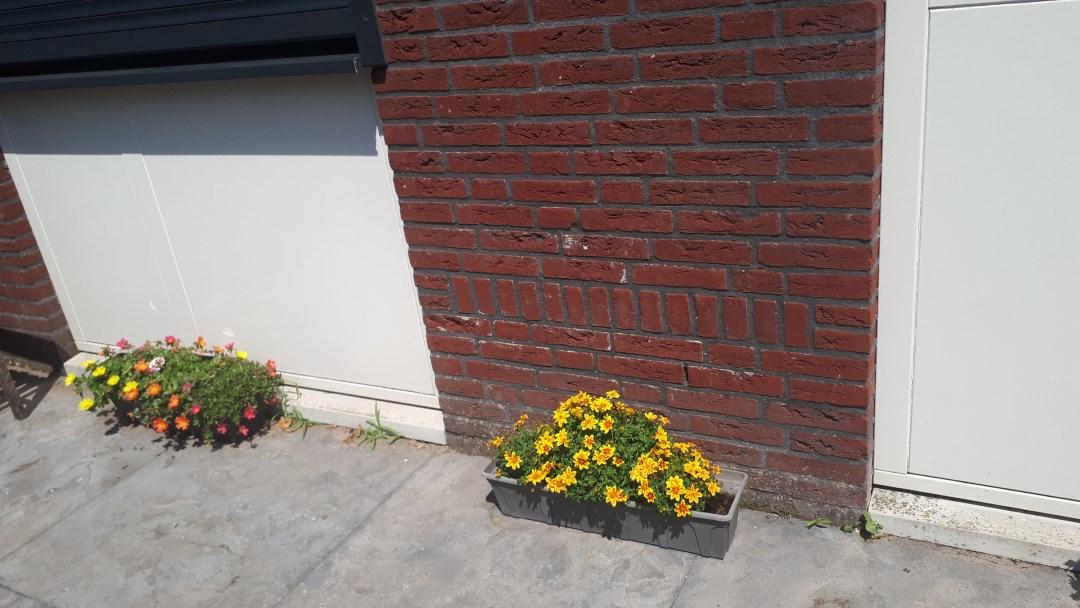 bloembakken met bloemen juli 2019