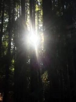 L'uomo-albero, gli incendi e i messaggi