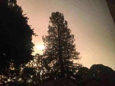 uomo-albero-incendi-e-messaggi