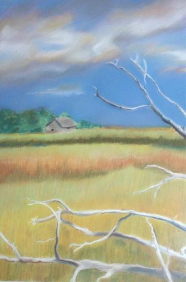 Baldhead Marsh