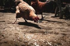 Hühnerinnereien