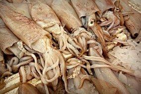 Octopus Angelköder