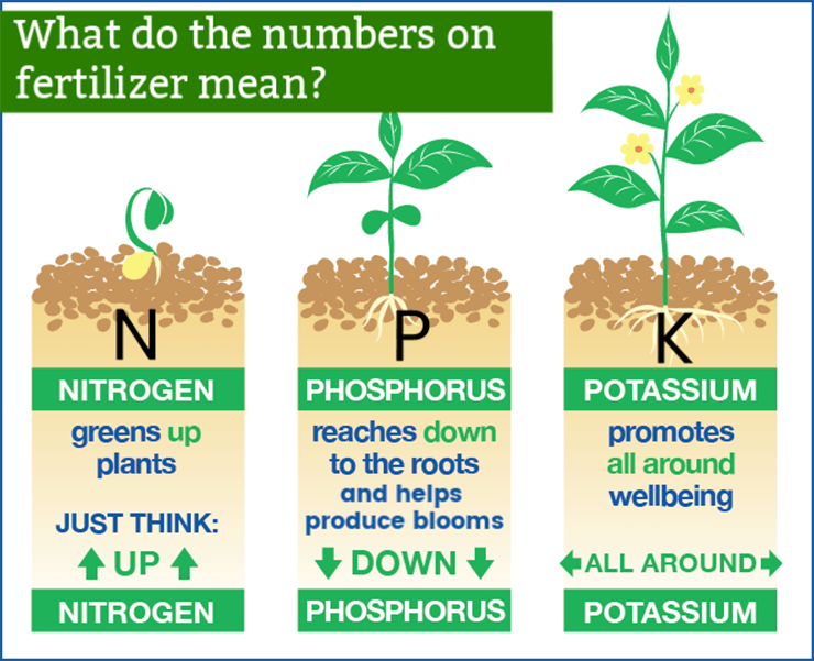 What is NPK Fertilizer and How to Use it?
