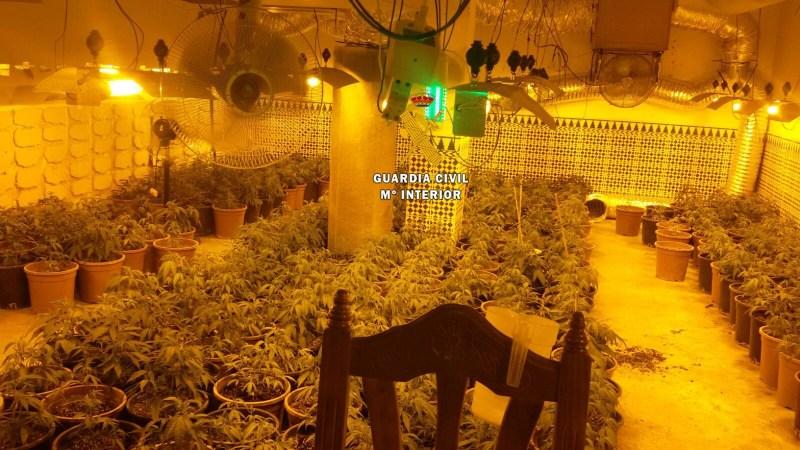 Diez detenidos de una organización criminal dedicada al cultivo de marihuana