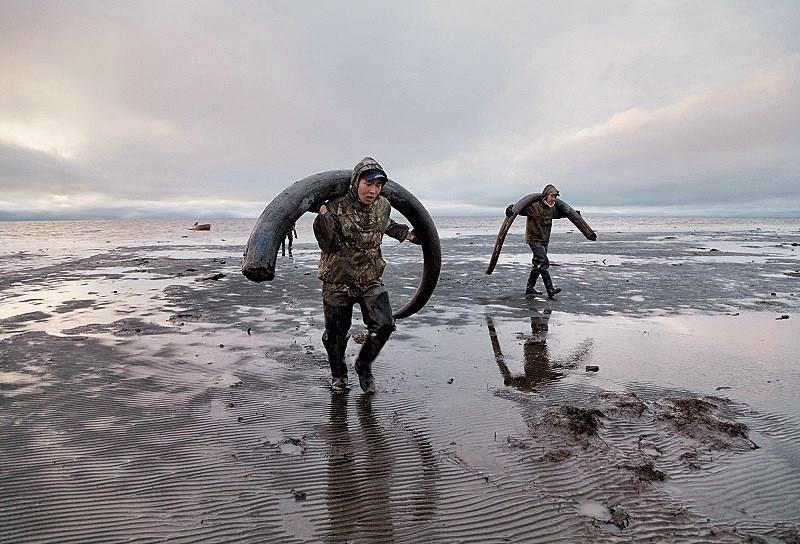El derretido permafrost provoca la fiebre de la búsqueda de marfil de mamut